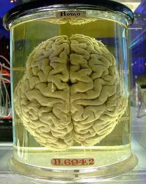 cerveauhumain.jpg